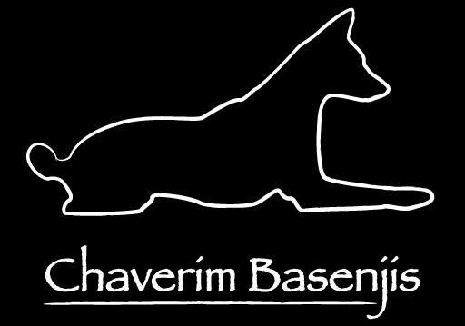 Chaverim Basenjis
